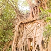 【タイ】菩提樹に覆われた不思議な寺院「ワットバーンクン」へ