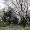 多摩川桜百景 -68. 国営昭和記念公園-