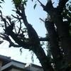 今年も私と樹木は二人三脚。