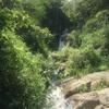 【チェンマイの滝で散策】蝶とたわむれて迷子