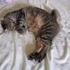 出会い。ママ猫ミーコ。
