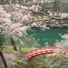 桜が満開となりました