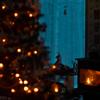 2本のクリスマスツリー
