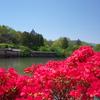 春の写真第2弾