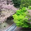 南濃だんだん公園と庭田山の桜