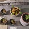【緊急事態】我が家の食虫植物たちの様子が…?