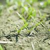 人生の種を蒔くコツ「種まく人」