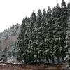 林業を生業とする村