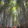 【京都】嵯峨野の竹林~野宮神社と穴場の竹林
