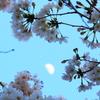 春の宵(上弦)