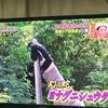 TBS「ジョブチューン スゴ腕ハンター密着」に見る生き物の過剰採集の影響 ※10月22日更新