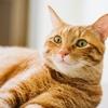 【猫飼い必見】新型コロナウイルスは猫に感染しないのかQ&A