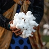 新疆ウイグルの人権問題を憂慮するパタゴニア コットン素材の調達をやめる
