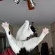 今日の黒猫モモ&白黒猫ナナの動画ー740