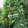 ゴーヤでcookingそして、多肉植物の挿し芽