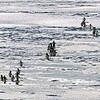 氷海にペンギンの行列 餌を捕り、巣に帰る途中(南極)