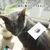 嬉しいメンバーズカード!