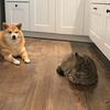 犬猫脱走劇&ぷるぷるぷる