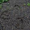 知床の足跡:Footprints in Shiretoko
