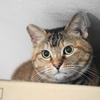 12月後半の #ねこ #cat #猫 どらやきちゃんA