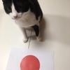 【エムPの昨日夢叶(ゆめかな)】第853回 『予想ネコ・レフくん。日本、奇跡の勝利!W杯史上初、南米勢撃破を見事的中させた夢叶なのだ!?』[6月19日]