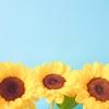 【368日目実績】夏期講習11日目(算国理)~また苦手範囲、翌日の休みに助けられる~