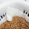 不織布の代わりに「洗って使えるペーパータオル」を使ってベビーリーフを栽培中。破れずに収穫まで耐えられるでしょうか?
