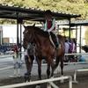 巨大な牛久大仏と、癒しの乗馬体験を楽しんだ茨城ドライブ(2013年9月の記録)