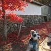 満願寺〜川西市にある犬も参詣できるお寺