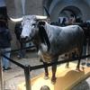セビリアの闘牛場を見学してきました