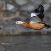 2020年2月1日の鳥撮り-静岡県掛川市(2/2)