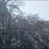 雪がー♪大降りだー♪