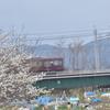 とある列車と桜