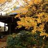 祖父江の善光寺と黄葉まつり