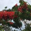 琉球民謡登川流研究保存会コンクールで沖縄へ