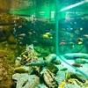 【滋賀県観光スポット】県外の人にこそ来てほしい!進化を遂げる琵琶湖博物館の魅力