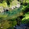 新緑の根尾川