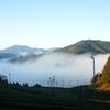 雨上がりと霧の茶畑