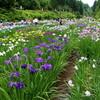 花しょうぶ祭り