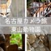 イケメンすぎるゴリラ『シャバーニ』に会いに名古屋の『東山動植物園』へ