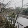 また・・・雪?