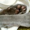 【断酒126日目】猫の冷たいところ
