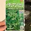 作物No.23 イタリアンパセリ栽培はじめました~特徴と使い方まとめ~