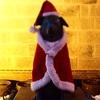 サンタクロースは大忙し
