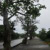 石垣再訪(23)竹富島の赤瓦。