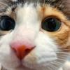 【愛猫日記】毎日アンヌさん#187