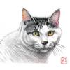 猫画その2
