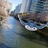 桜舞う目黒川を悠然と泳ぐマンタイン【ポケモンGOAR写真】