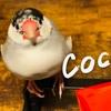 ハッピーウエハース ココア (Happy Wafers cocoa)