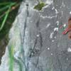 日本で最も美しい赤トンボ